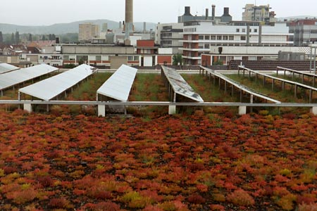 Solar Panels On Aggregate Roof With Sedum Note Difference In Vegetation